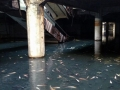 fish-abandoned-shopping-mall-bangkok
