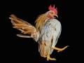 goh-cocks-08